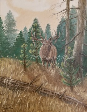 "Elk Bugle This was my first animal oil painting. It is a 8""x10"" painting of an elk bugling in a meadow just outside a pine tree forest."